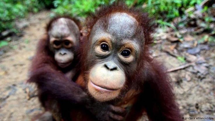 24 bin canlı türü yok olma tehdidi altında