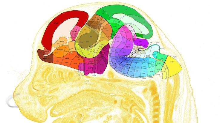İnsan beyninin en kapsamlı haritası çıkarıldı