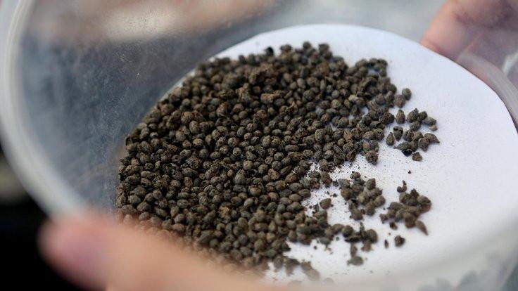 5 bin yıllık üzüm çekirdekleri bulundu