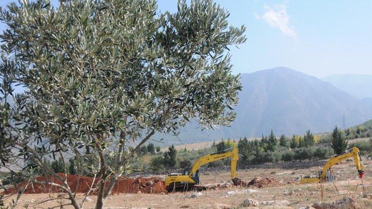 6 bin zeytin ağacı kepçelerle sökülüyor