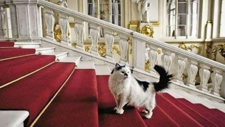 Rusya'da kedilere özel kafe