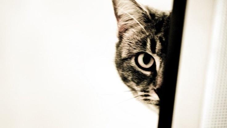Kedi kumunu uyuşturucu sandılar