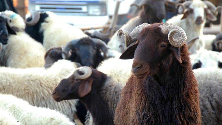Yüzde 385'lik artış hayvancılığı bitirdi