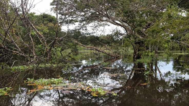 Temiz kalpler Amazon'da