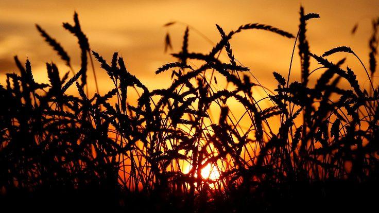 Tarımın endüstrileşmesi ve açlık…