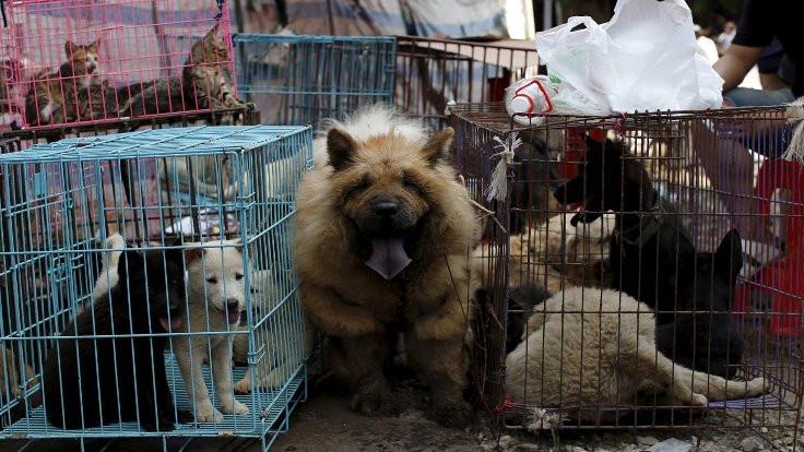 Artık kedi köpek yemek yasak!