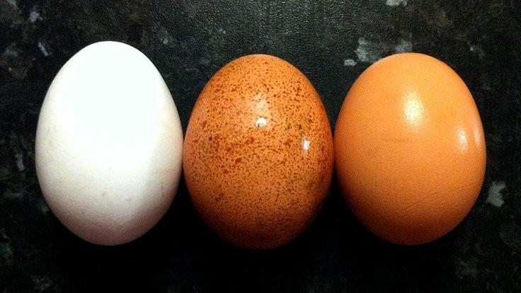 Kalsiyum deposu yumurta kabuğu