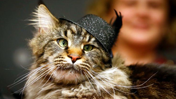 Bilim insanları: Kediler nankör değil!