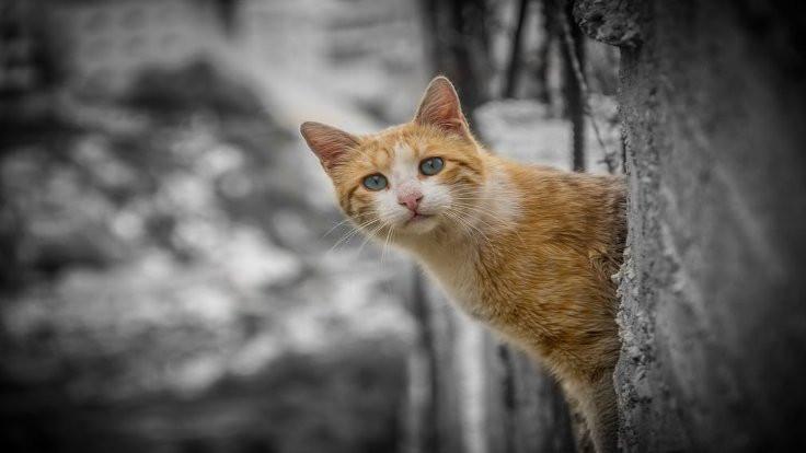 Ankara Büyükşehir Belediyesi yeni hayvan barınağı yapacak