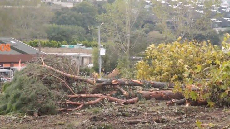 Sarıyer'de çocukların ağaçları kesildi!