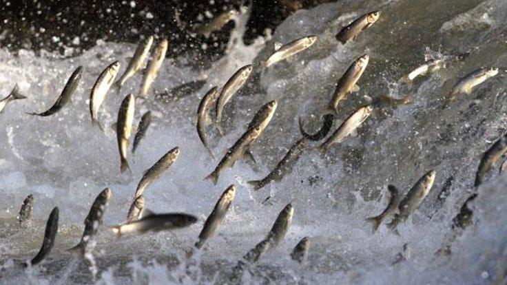 Mevsimin balığı