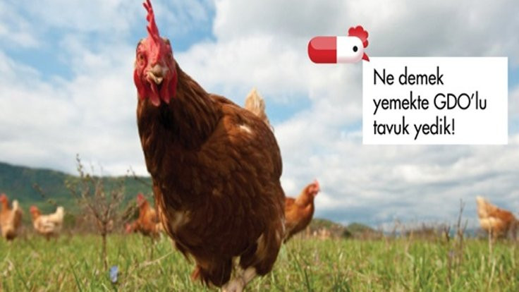 Greenpeace'e tavuk davasından beraat