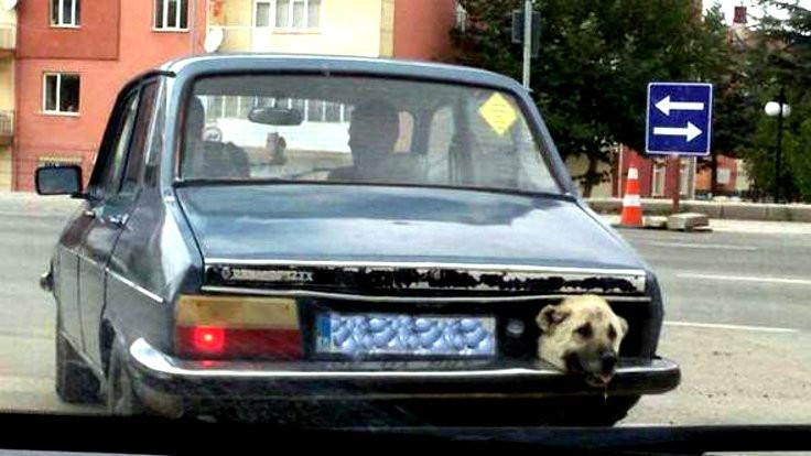 Sinyal yerine 'hava alsın' diye köpek