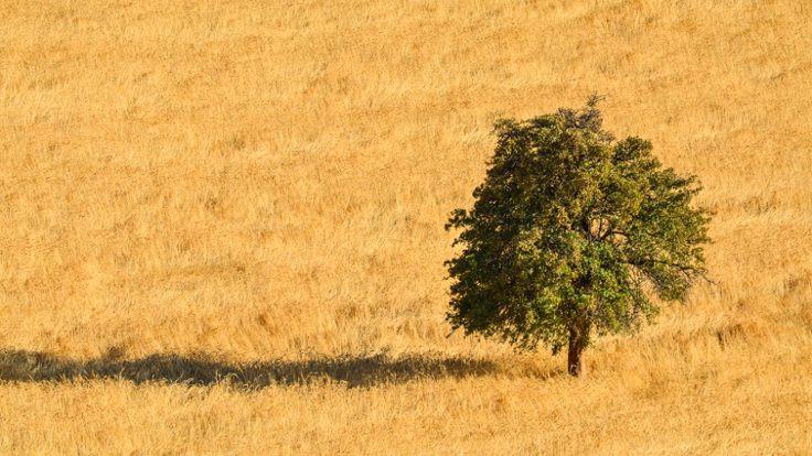 Türkeş: İyi roman talep eden var mı?