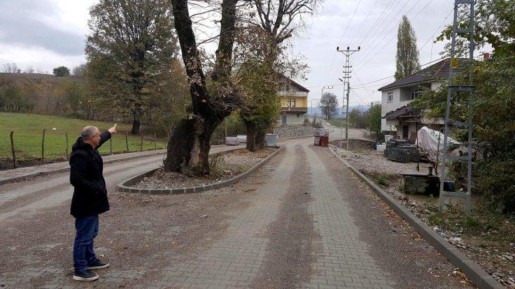 Meşe ağaçlarını kesmemek için yol projesini değiştirdiler