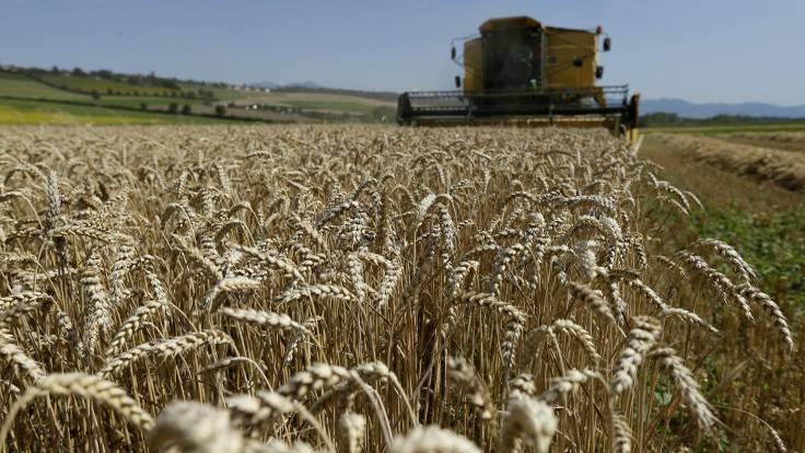 Sadece organik beslenme çevre felaketi yaratabilir