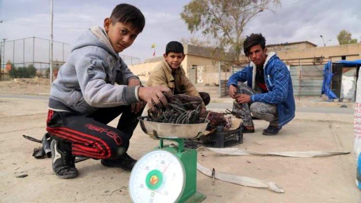 Êzidî çocuklar okul yerine demir toplamaya gidiyor