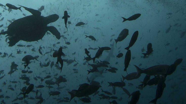 Okyanuslarda keşfedilmemiş kaç canlı var?