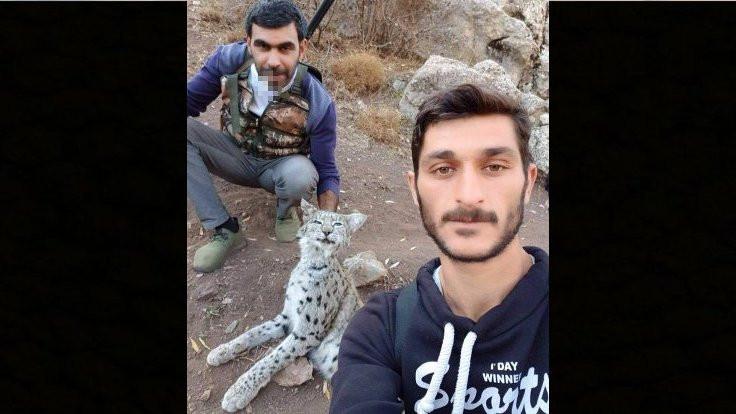 Anadolu'da vaşaklar avcı tehdidi altında