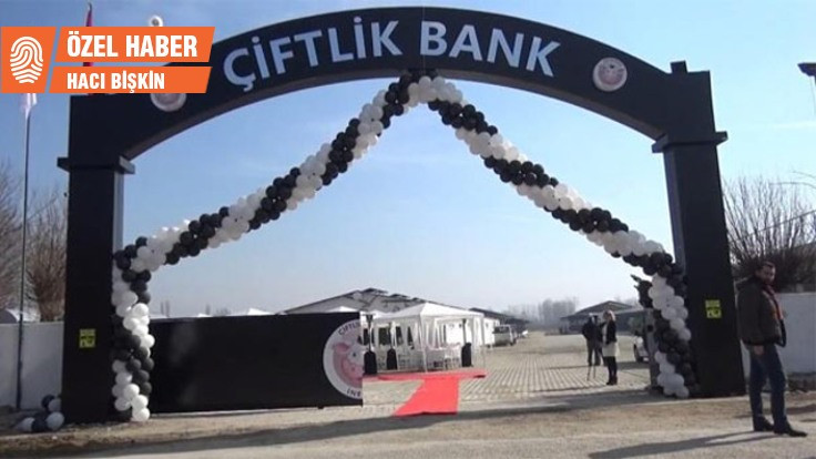 'Türkiye'den umudu kesince Çiftlik Bank'a girdik'
