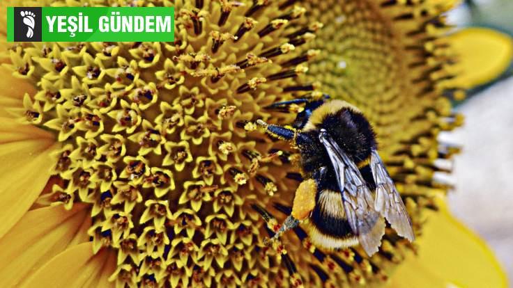 Arıları hasta eden böcekler