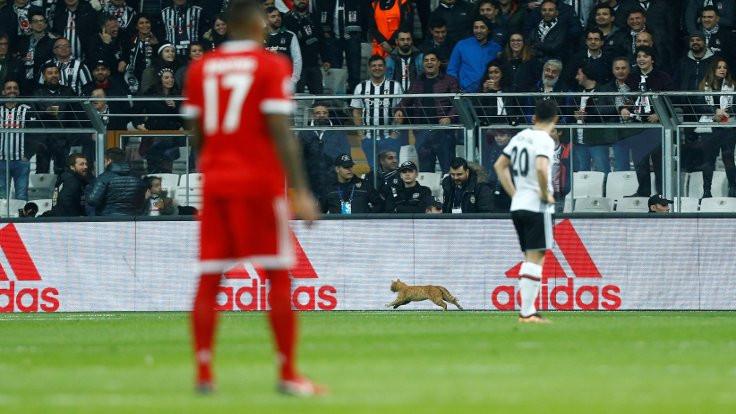 Beşiktaş-Bayern Münih maçının adamı: Kedi