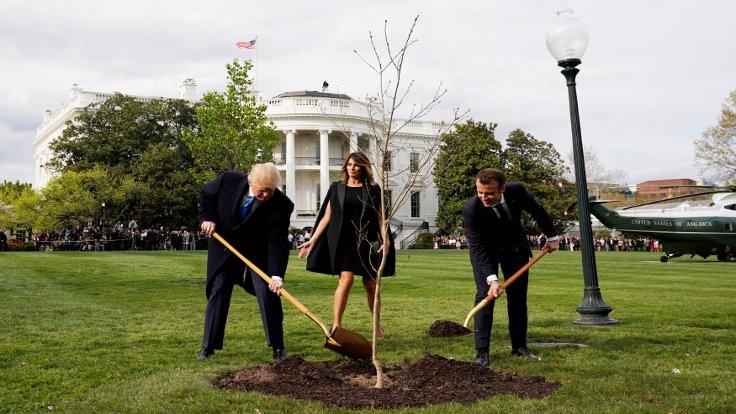 Diktikleri ağaç karantinaya alındı!