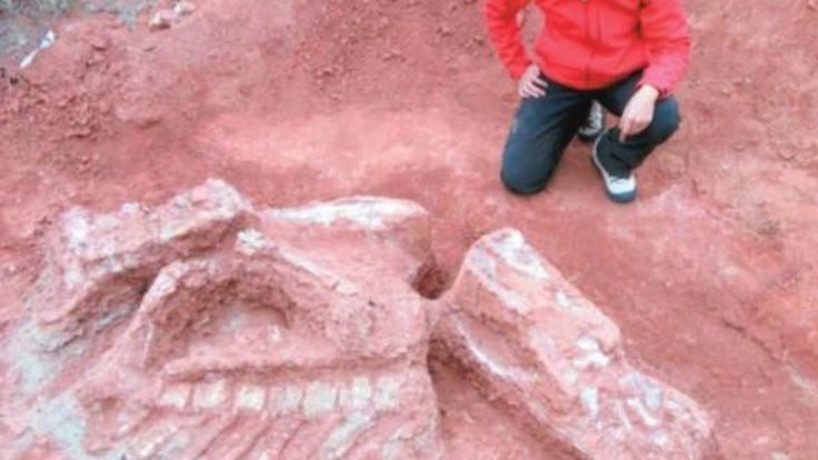 Tarihi değiştirecek dinozor fosili bulundu!