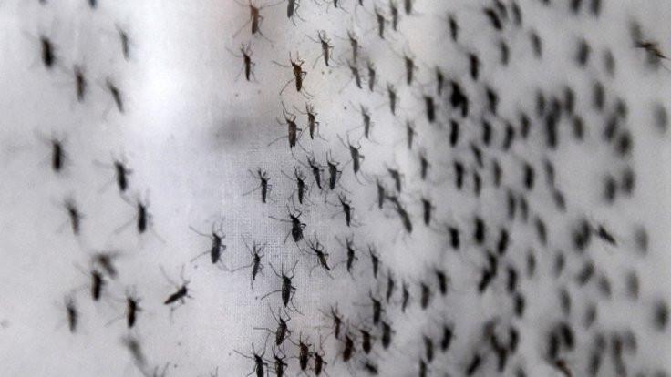 Sivrisineklerin girmesi kararnameyle yasaklandı
