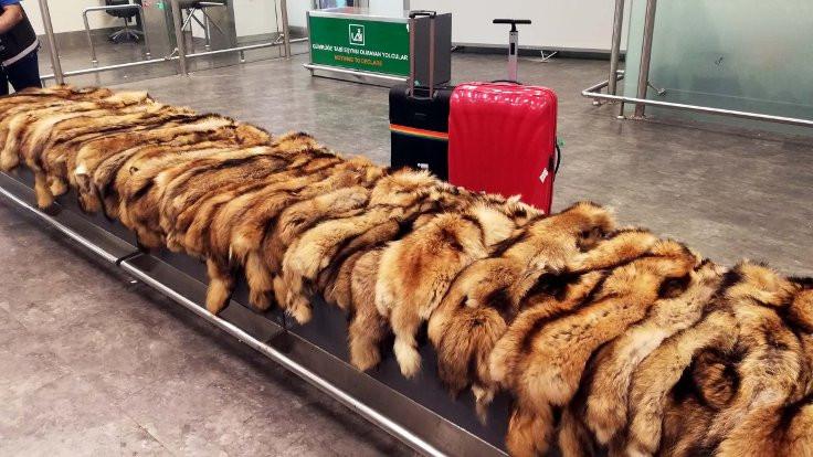 Unutulan valizde tilki kürkleri