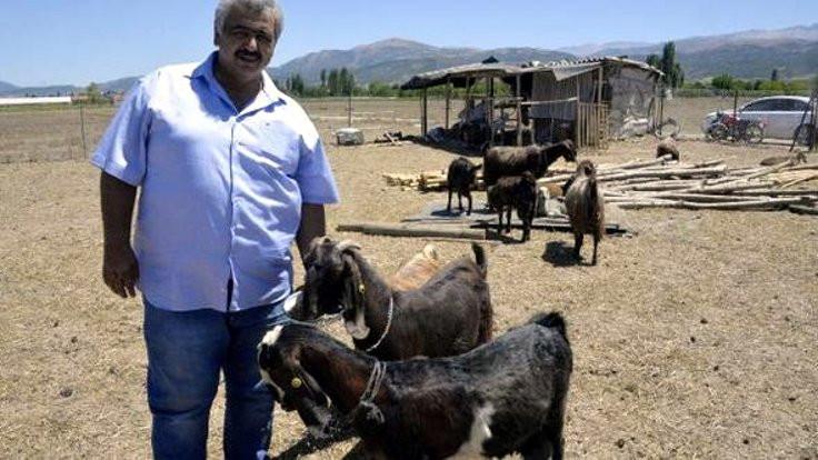 18 futbolcu satıp 10 keçi aldılar!
