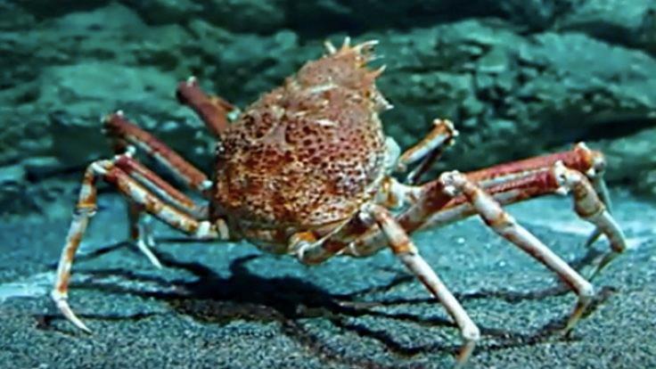 Plastik yerine deniz kabuğu