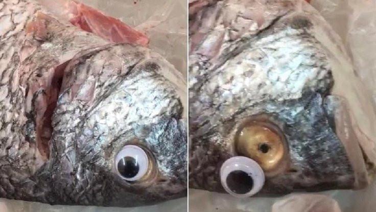 Taze görünsünler diye balıklara oyuncak göz!