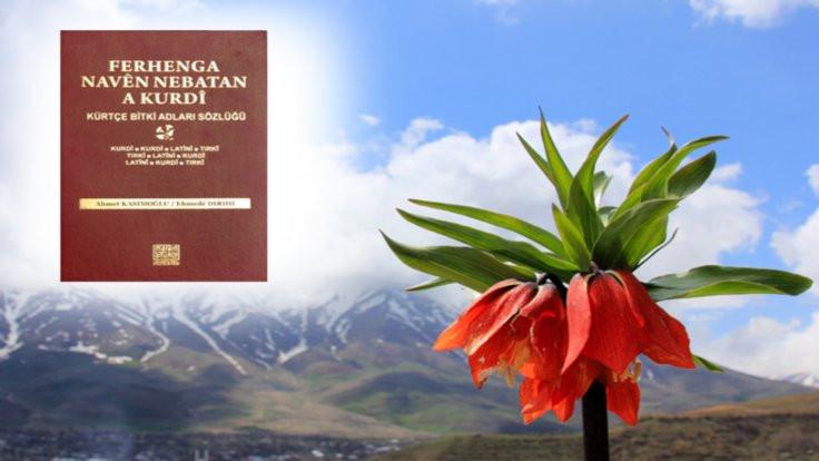 Kürtçe bitkiler sözlüğü...