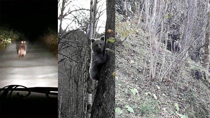 Otomobille ayı kovaladılar!