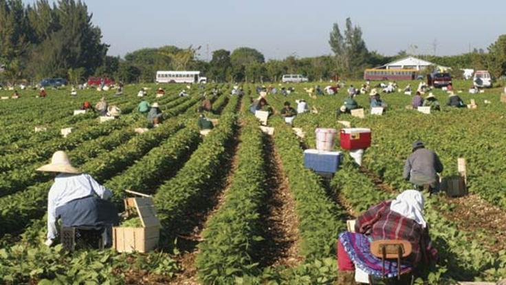 HDP'den tarım sempozyumu: Yerelde üretilen ürünler için ithalat yasaklansın