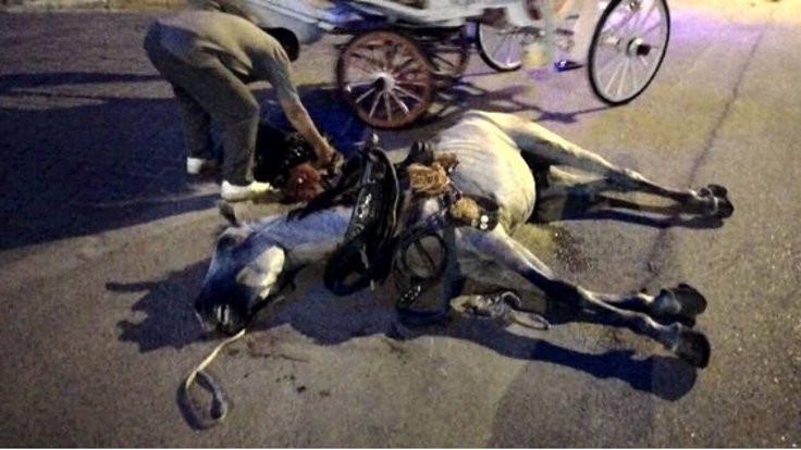 Yasaklar uygulanmadı, at ölümleri arttı