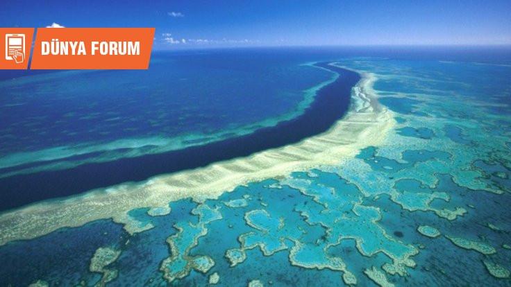 Büyük Bariyer Resifi: Dünyanın turnusol kâğıdı