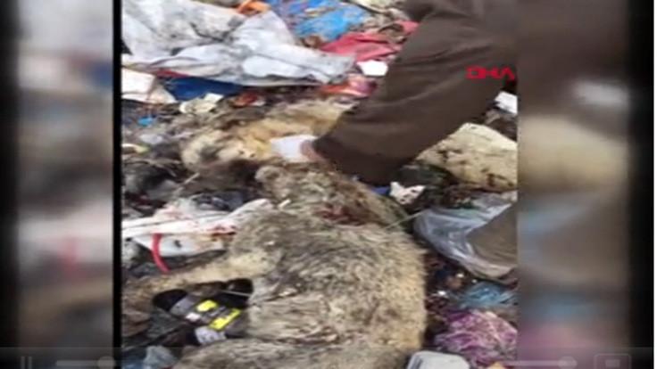 Çöpte 12 köpek ölüsü bulundu!