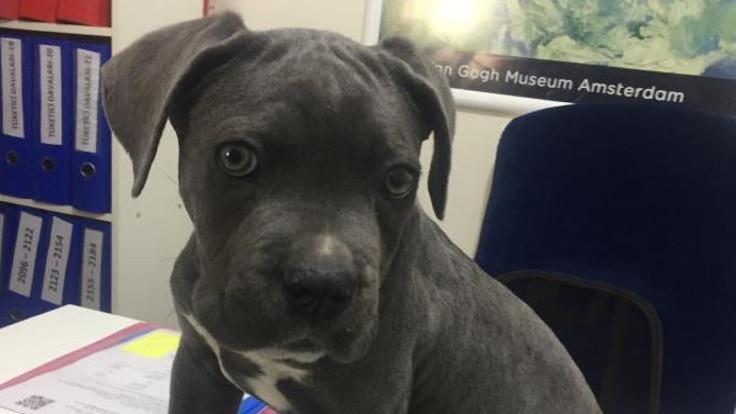 Borç nedeniyle yavru köpek haczedildi!