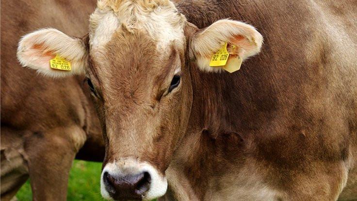 'Asıl sorun inek gazı'