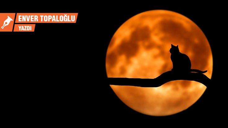 Kedilerle oynayan şiirler