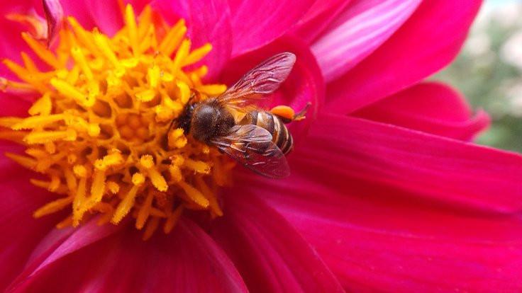 Bal arısının can yakan Zen dersi