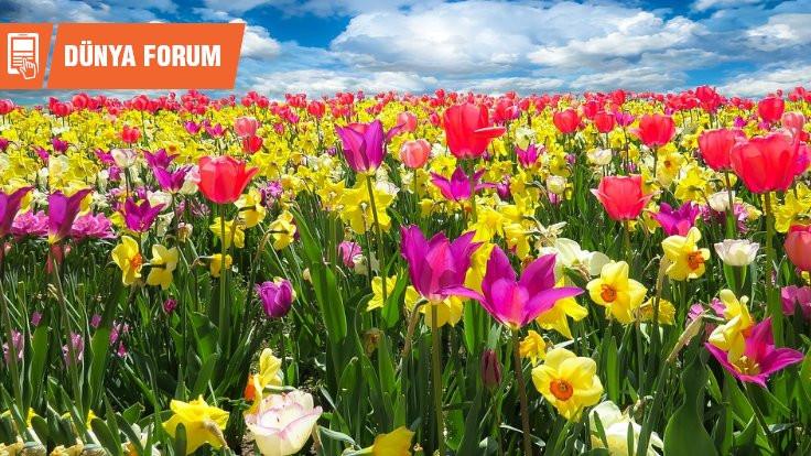 Newroz: Hayatın uyanışı