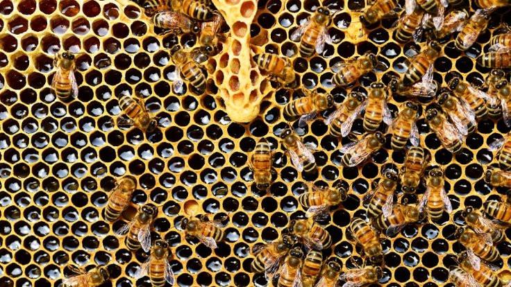 Notre Dame'ın arıları kurtuldu