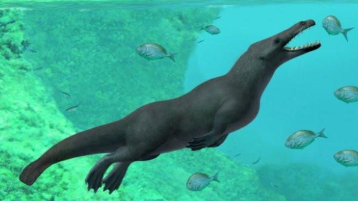 43 milyon yıllık balina fosili!