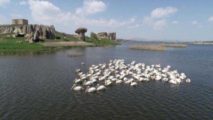 Pelikanlar Frigya'ya konuk oldu