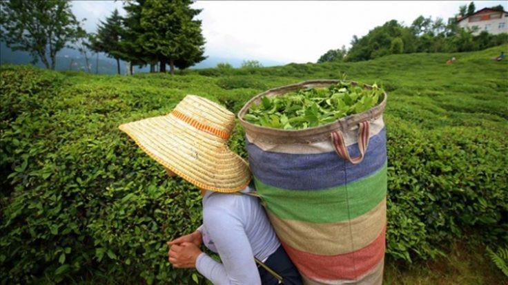 Çayın taban fiyatı 5 lira 80 kuruş oldu
