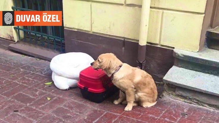'Terk edilen' köpeğin sahipleri sınırdışı edilmiş