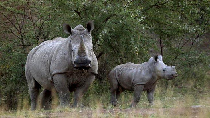 Hayvanlarla birlikte doğayı da yok ediyoruz